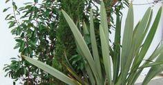 9 idées de jardinières pour embellir son balcon et sa terrasse - Marie Claire Maison