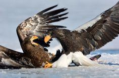 Явижу мир по-своему: Сергей Горшков — National Geographic Россия