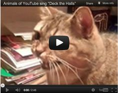 Deck the Halls, sung by Cats. Lyrics to nearly 100 Christmas songs @ http://www.learnyourchristmascarols.com/2009/11/deck-halls.html#