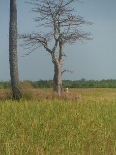 Ile de Carabane les rizières