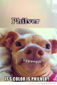"I have no idea why I laughed so hard at this. Every time I look at This dig's face I can hear him saying ""philver."" Ha! Ha! Ha!"