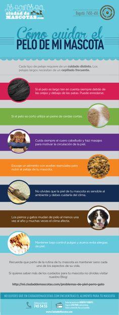 Cuidar el pelo de tu perro y tu gato no es tarea fácil ya que recibe del medio las impurezas y suciedad. Debes tener siempre a la mano un cepillo y cuidar su alimentación.