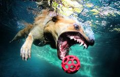Underwater dog photography by Seth Casteel.