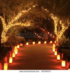 Trees and path lit with holiday lights and luminarias at night