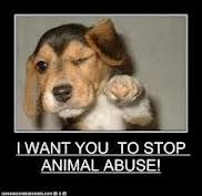 PLEASE REPIN THIS.  If you ever see any animal being abused turn their ass in period.!!! They have feelings too!