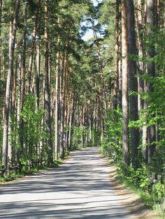File:Road to Kallahti nature conservation area in Helsinki (Kallvik).jpg