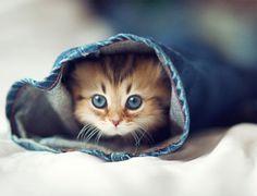 Один день из жизни котенка в фотографиях