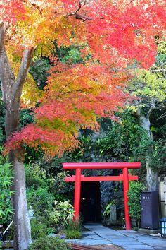 長谷寺 ~鎌倉の紅葉 Autumn leaves in Hasedera Temple,Kamakura,Japan