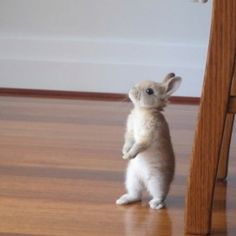 Cutie... I WANT ONE for easter!
