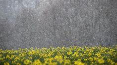 Unbeständiger Wochenstart: Schnee fällt bis ins Flachland