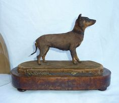 Got to love this tiny Victorian taxidermy specimen... WOOF!
