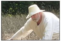 Eine typisch b&auumluerliche Tätigkeit: Ernten des Getreides mit der Handsichel.