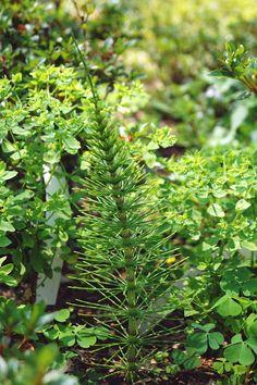 Park Seleger Moor, czyli czy warto zapłacić za kontakt z naturą? Switzerland, Flora, Park, Photography, Insects, Plants, Photograph, Fotografie, Parks