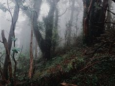 The mist aesthetic