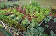 You have certainly made a good decision if you have decided that you want to grow your own organic garden. There is a lot of technique involved to... FULL ARTICLE @ http://www.gardening-with-me.com/things-to-do-to-become-better-at-organic-gardening-3/?pc1hd