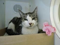 SUN FLOWER - A1102834 - - Manhattan  *** TO BE DESTROYED 02/17/17 *** SUN FLOWER IS ONLY 8 YRS OLD – HAS HYPERTHYROIDISM, NEEDS MEDICAL FOLLOW UP, IS FRIENDLY AND NEEDS A HOME! -  Click for info & Current Status: http://nyccats.urgentpodr.org/sun-flower-a1102834/