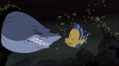 Sharks do not like being teased.