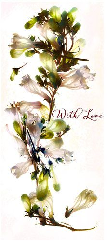 Customize this beautiful card with your own greeting, if you'd like! Mothers Day Card Mothers Day White Curve by GreenInkGallery, $4.99