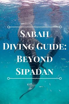 If I sum up Sabah diving in one word, it is diversity. This Sabah diving guide lists the best macro, corals, and other marine life found beyond Sipadan. Semporna, Scuba Diving Quotes, Best Scuba Diving, George Town, Kuching, Fiji Travel, Asia Travel, Kuala Lumpur, Borneo Travel