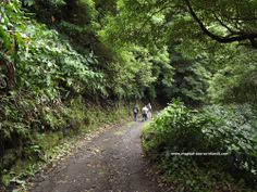 Hiking in Sao Miguel #Azores. This is an easy, downhill hike, that follows a stream down to Ribeira Quente