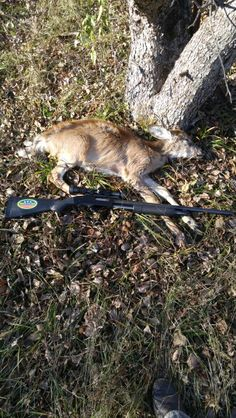 Fawn buck that was sick and died on the farm Nov. 16 2015