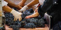 Lyrarakis Wines is a champion of local varieties in Crete!