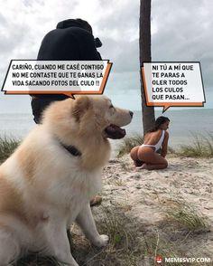 Meme tener oficio con beneficio #girl #sexy #dog #love #amor #chiste #meme #español #memesenespañol #2017 #memesvip #chistecorto #humor
