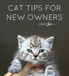 10 CAT TIPS FOR NEW OWNERS. Check out the scope on @freshsteplitter  at @samsclub kitty litter. #ad #yougottabekittenme
