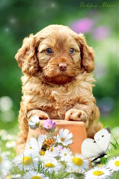 Doggie in den Gänseblümchen - Animation Telefon Baby Animals, Funny Animals, Cute Animals, Cute Dogs Breeds, Dog Breeds, Animated Emoticons, Gato Gif, Puppy Images, Cute Animal Videos