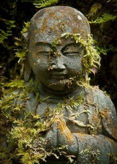 Moss, contemplation, patience