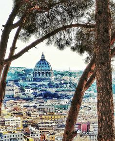 """Saintly Trees"" - Roma  #photobydperry #loves_united_lazio ##wp #Italia_super_pics #ig_italy #ig_rome #going_into_details #loves_united_roma #spgitaly #igerslazio #loves_united_places #ilikeitaly #italia_dev #pocket_Italy #gallery_of_all #total_Italy #loves_united_team #yallerslazio  #italy_hidden_gem #igw_italy #fdnf #lazio #ig_lazio_  #ig_lazio #nikontoday #unlimitedrome #my_rome #thehub_italia #loves_united_europe #rome"
