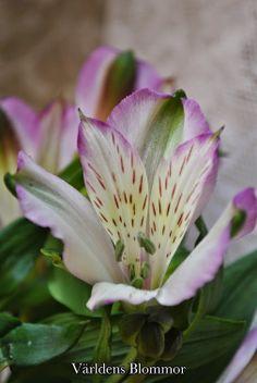 Världens Blommor Annorlunda Blomsterbutik 0418651159