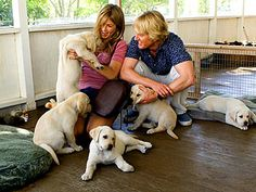 In the movie, Marley and Me, Jenny and John picking Marley, when Jenny falls in love with the hyper one, soon to be Marley.