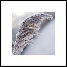Photo Winter, Nature, Rest