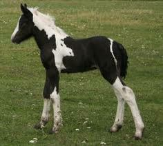 Baby Horse Cute Horses Animals Babies Age