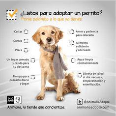 Lo que necesitas para adoptar un perro
