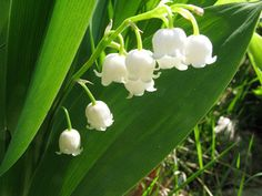 The 12 Best Flowers for a Spring Wedding: Lily of the Valley