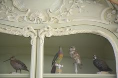 Cabinet of Curiosities of Bonnier de la Mosson, Paris   Flickr - Photo Sharing!