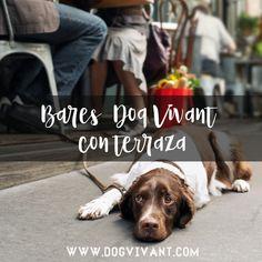 Bares y restaurantes #dogfriendly con terraza 😎🍹para disfrutar este verano con tu #perro en Bizkaia 🐶