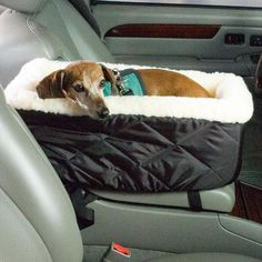 Car bed. Cute and practical for small dogs or puppies. Could probably make this out of a 31 bag and a dog bed/fluffy blanket