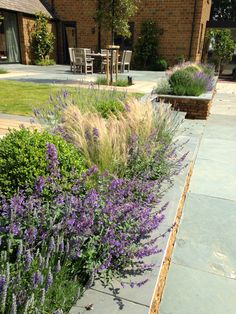 New borders, lavender, catmint, Box and Stipa