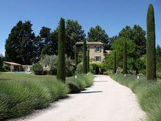 Lavande et cyprès en Provence