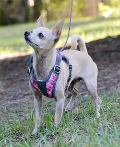 The Dog Geek: Put on a Petco Mesh Harness | Dog Harnesses ...