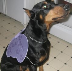 My doberman is trying to fly away!! :)