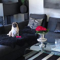 Veldig flott hos Repost @jlegnerhrnjic. #Rihannapokalvasesmall fra @classicliving  #classicliving #pokalvase #livingroom #interior4u #interior125 #glam #inspohome #stue #dekor #decor #passion4interior #passionforinterior #vase #interior #interiør #interiors