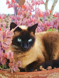 Pretty Cat...  #Follow me on Cat World If You Like What You See 4 Way More ! ¡ !