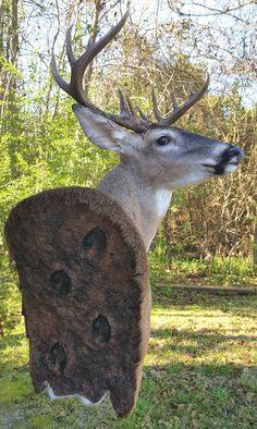 Deer Hunting Decor, Moose Hunting, Deer Decor, Trophy Hunting, Bow Hunting, Hunting Stuff, Taxidermy Decor, Taxidermy Display, Elk Horns