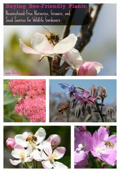 Buying Bee-Friendly Plants: Neonicotinoid-Free Nurseries, Growers, and Seed Sources