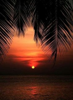 Beautiful sunset 🌅 Welcome Join Our Newsletter - Pay one get one free! Amazing Sunsets, Amazing Nature, Sunset Wallpaper, Beautiful Sunrise, Belle Photo, Pretty Pictures, Beautiful Landscapes, Beautiful World, Palm Trees