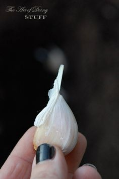 how to grow garlic the right way :)